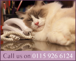 Call Samfio Cattery on 0115 926 6124